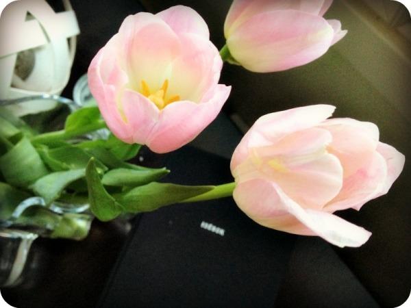 tulipstul1