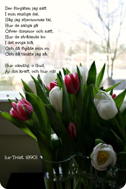 runebergsdagen2013
